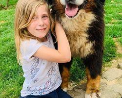 chiens de race - Le Haras de la Vergne - Dordogne